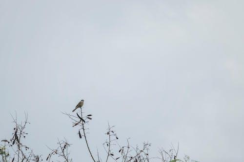 Photos gratuites de observation des oiseaux