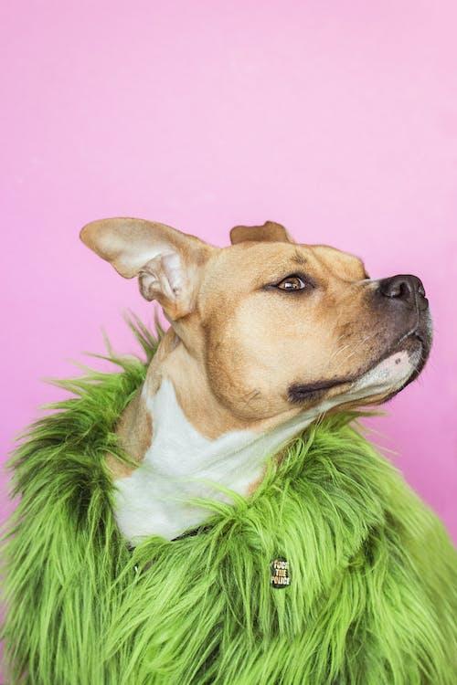 bezaubernd, canidae, fashion