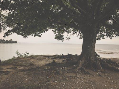 Fotobanka sbezplatnými fotkami na tému pamäť, pozrieť, romantický, strom