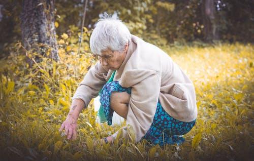 Kostenloses Stock Foto zu alt, arbeiten, frau, früchte