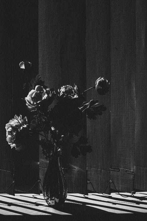 Foto d'estoc gratuïta de blanc i negre, cortina, flor, florir
