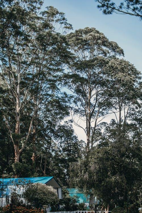 Imagine de stoc gratuită din acoperiș, câmp înverzit, case din lemn, codru