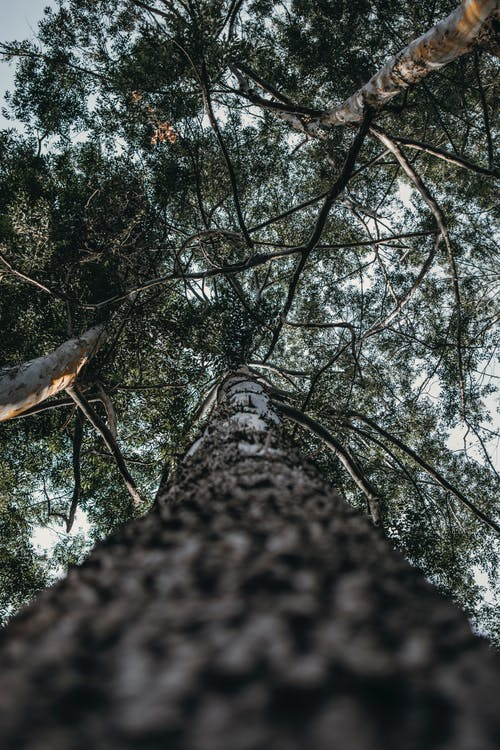 Worm's-eye View of Tree