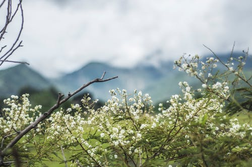 Gratis stockfoto met bergen, bladeren, bloeien, bloeiend
