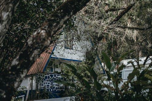 Бесплатное стоковое фото с высокие деревья, горы, дерево, деревянные дома