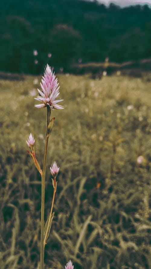 Foto profissional grátis de beleza na natureza, flor bonita