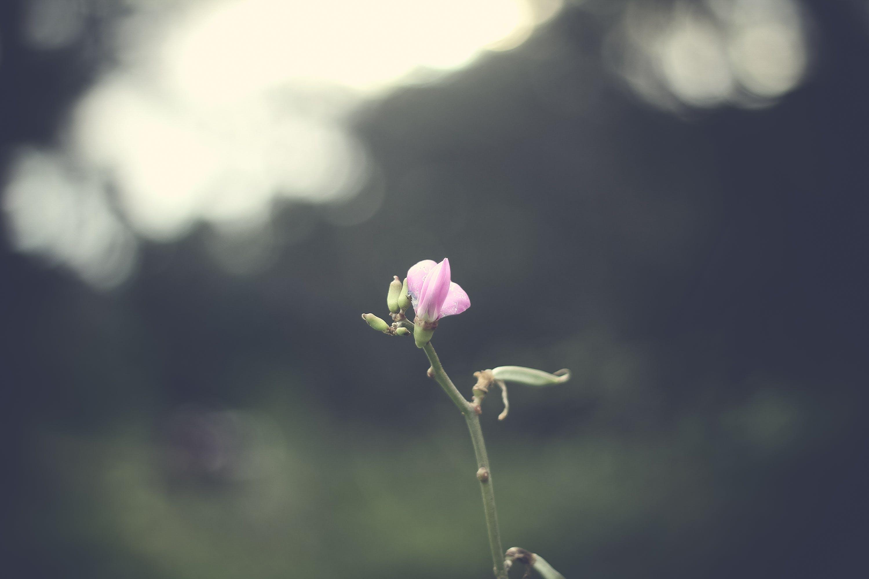 Ảnh lưu trữ miễn phí về cánh hoa, hệ thực vật, Thiên nhiên, vĩ mô