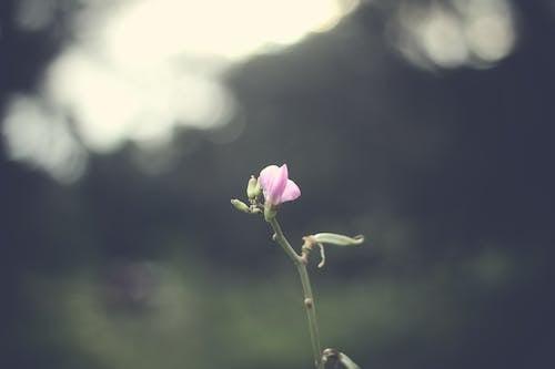 粉红色的开花植物