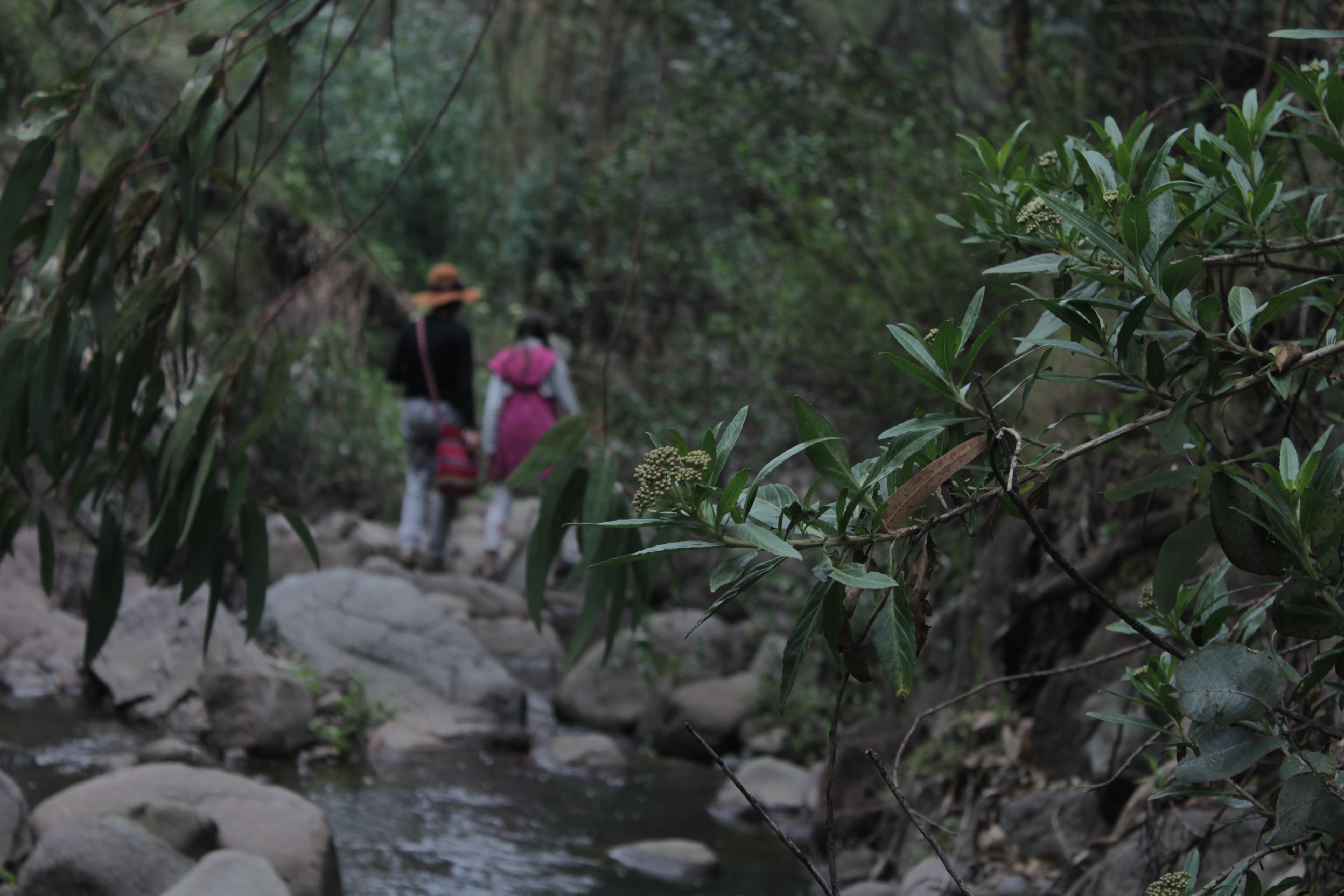 Free stock photo of adventure, mountain, moving walkway