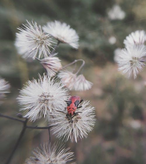 Foto profissional grátis de de flores, fotografia de insetos, macro