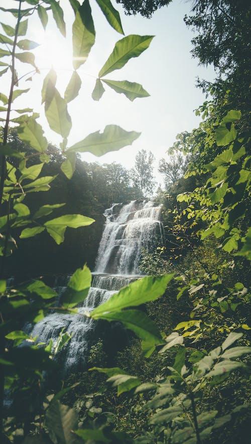 Безкоштовне стокове фото на тему «вода, вода падає, водоспади, дерева»