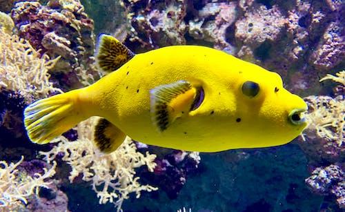 水中, 水族館, 魚の無料の写真素材
