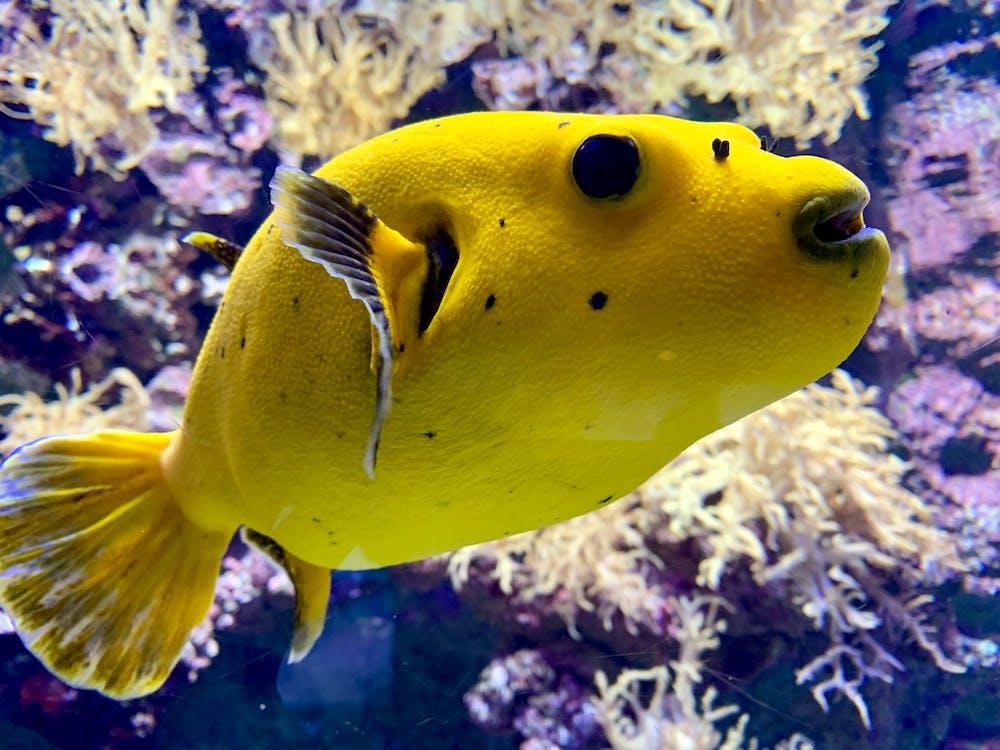 aquarium, fish, underwater