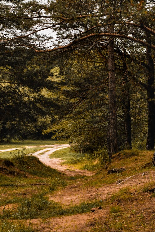 Darmowe zdjęcie z galerii z jesienny las, jodły, las, natura