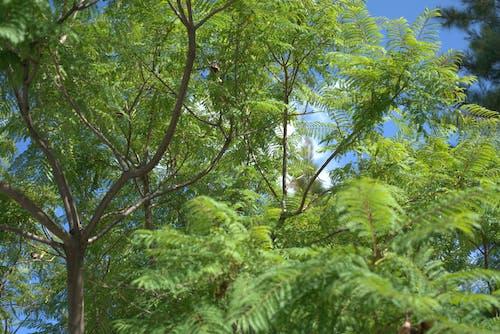 Immagine gratuita di albero, verde