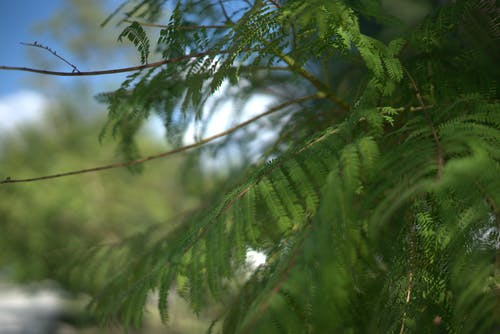 Immagine gratuita di bokeh, foglie, impianti, sfondo sfocato