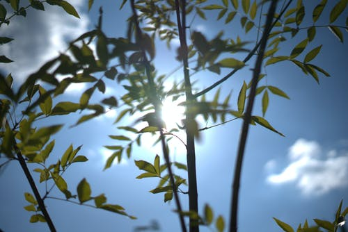 Immagine gratuita di bagliore, foglie, sole