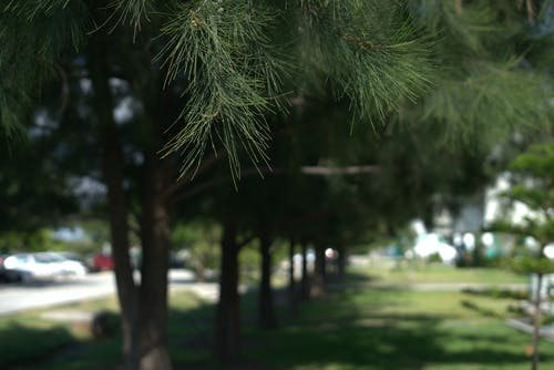 Immagine gratuita di bokeh, foglie, sfondo sfocato