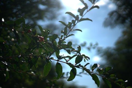 Immagine gratuita di bagliore, fiori, foglie, impianti