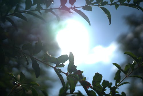 Immagine gratuita di bagliore, foglie, impianti, sole