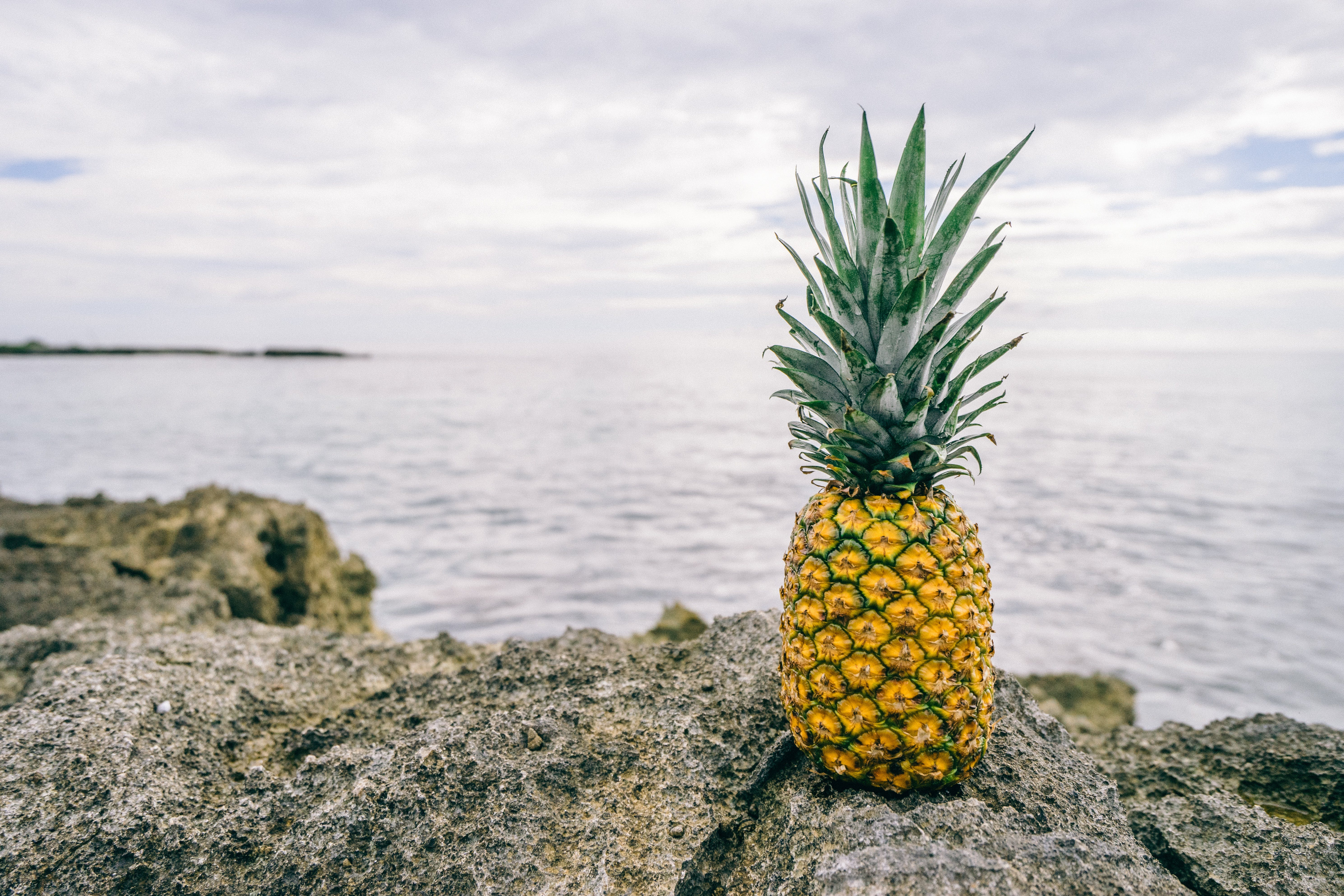 Ripe Pineapple on Gray Rock Beside Body of Water