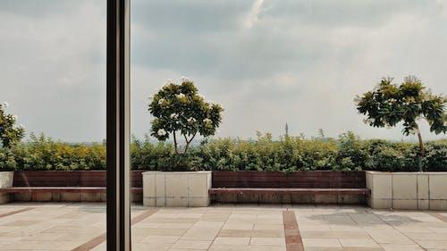 Безкоштовне стокове фото на тему «Денне світло, дерева, краєвид, легкий»