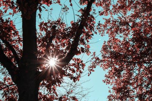 Foto stok gratis alam, jatuh, musim gugur, pohon