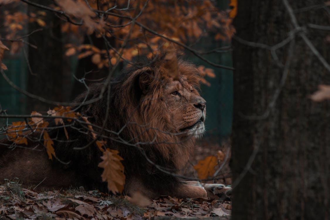 άγρια γάτα, άγρια φύση, άγριο ζώο