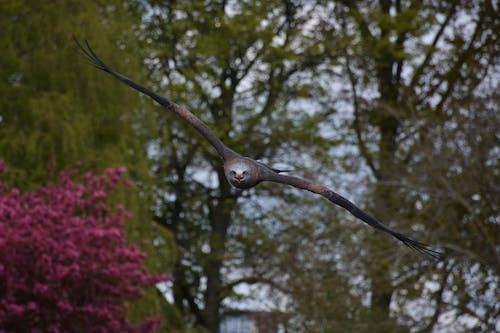 Δωρεάν στοκ φωτογραφιών με άγρια φύση, άγριος, αρπακτικό, αρπακτικό πουλί