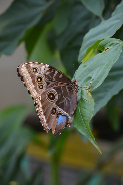 Brown Butterfly Perched On A Green Leaf