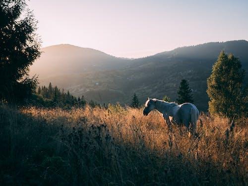 乾草地, 乾草田, 天性, 家畜 的 免費圖庫相片