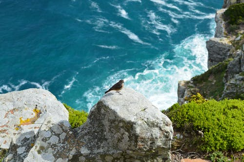 A Bird On A Rock Of A Mountain Cliff By The Ocean