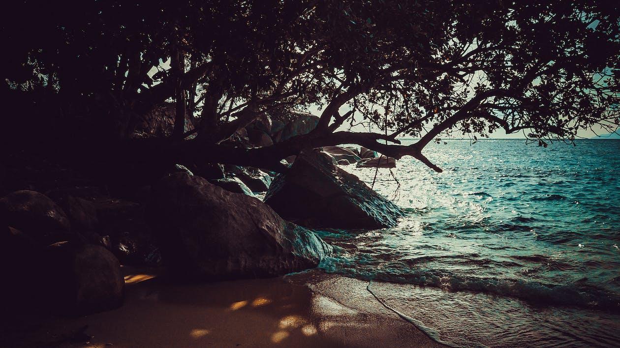 a l'aire lliure, a la vora de l'oceà, arbres
