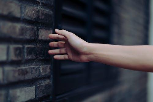 Základová fotografie zdarma na téma barvy, cihlová zeď, denní, denní světlo