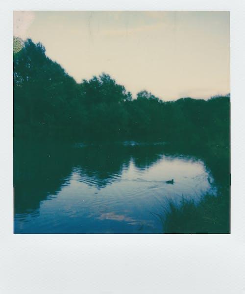 Ảnh lưu trữ miễn phí về ánh sáng, bình minh, con sông, gỗ