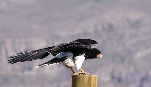 Photos gratuites de oiseaux de proie