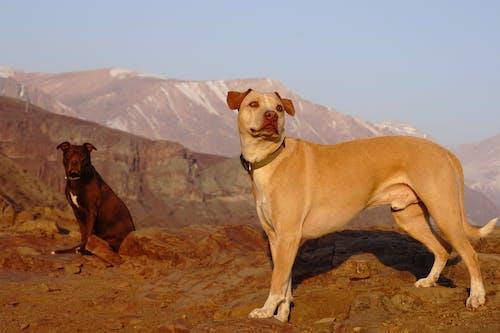 Photos gratuites de chiens
