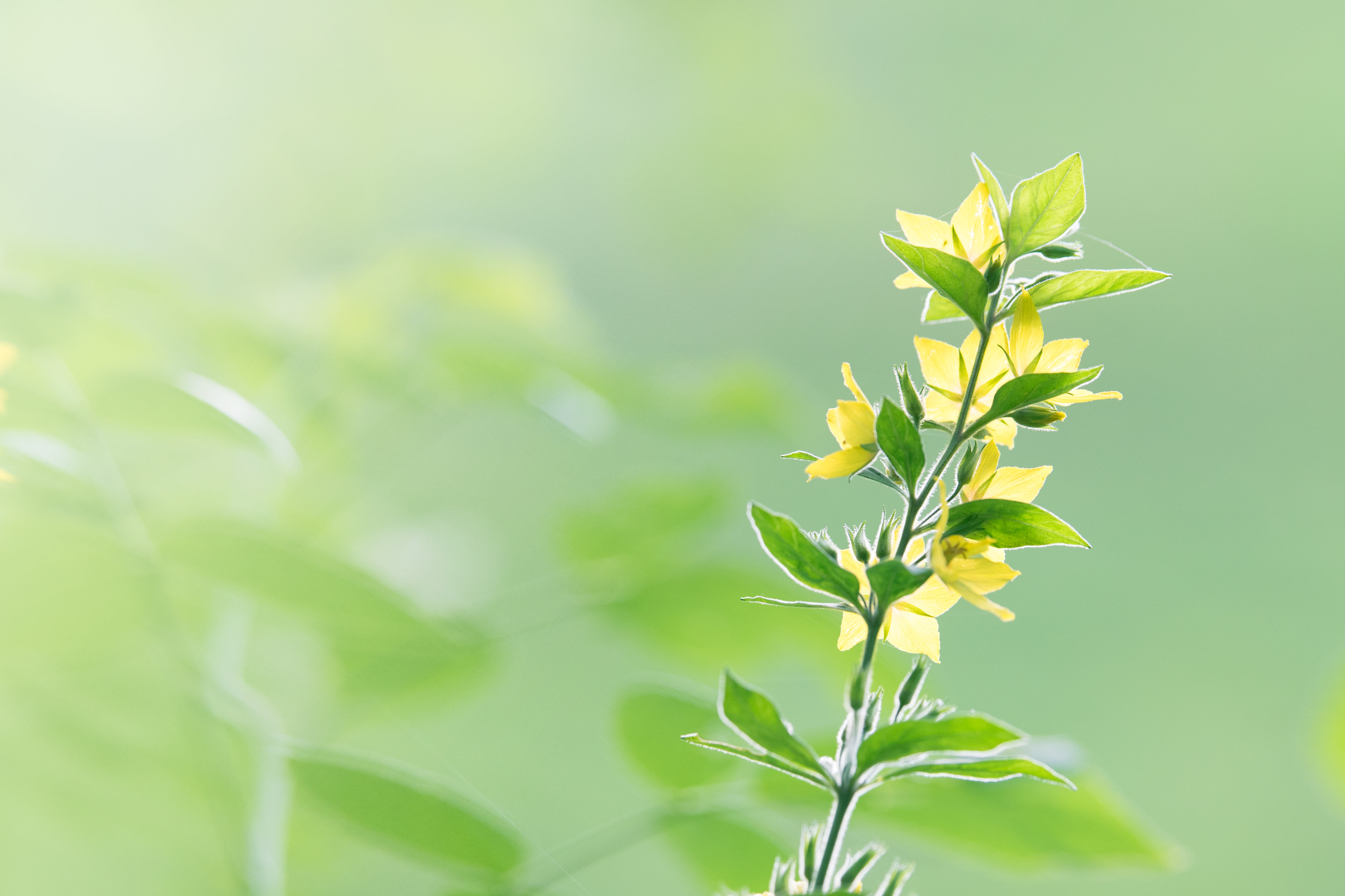 Selective Focus Photo of Yellow Flowers in Bloom