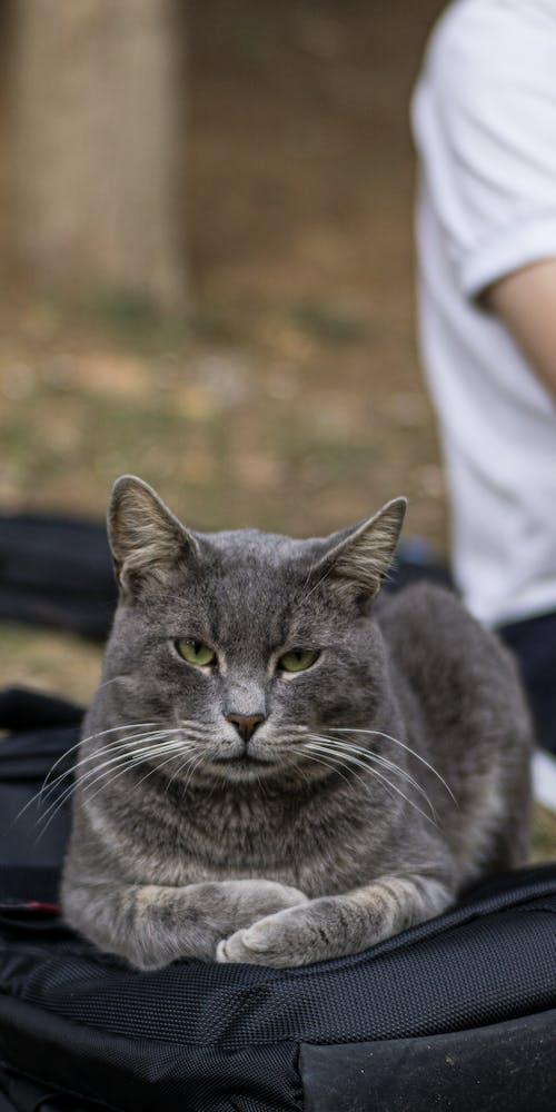 Free stock photo of cat, chilling, grumpy