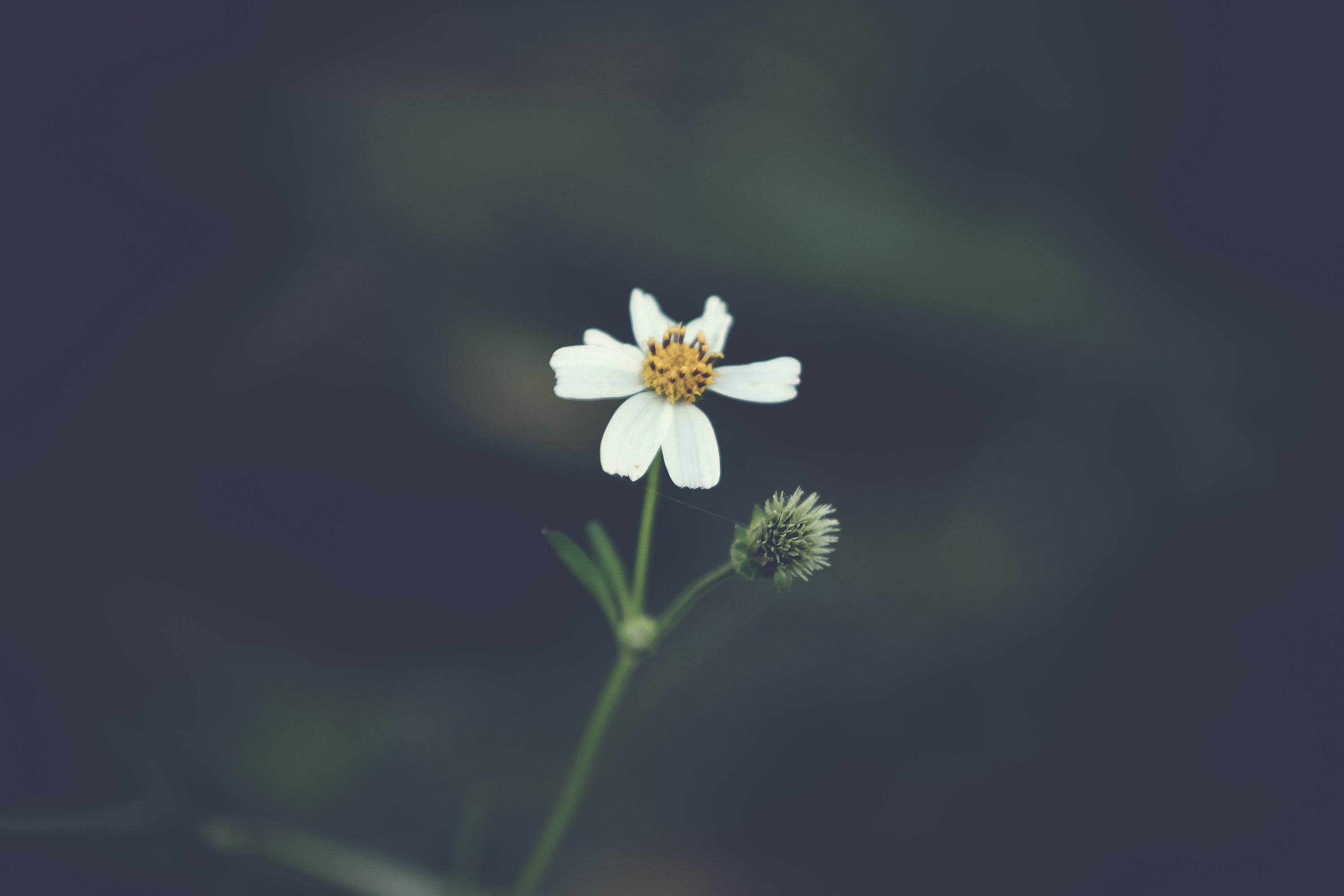 Selective Focus Photo of White Petaled Flower