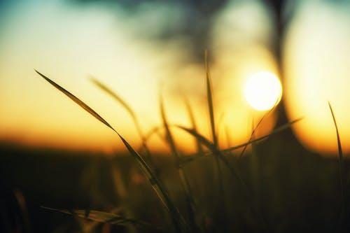 Photos gratuites de à contre-jour, aube, blé, brins d'herbe