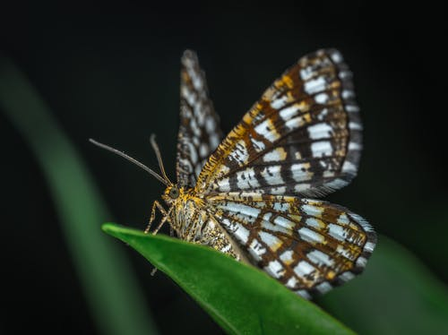Selective Focus Photography of Brown and White Butterfly