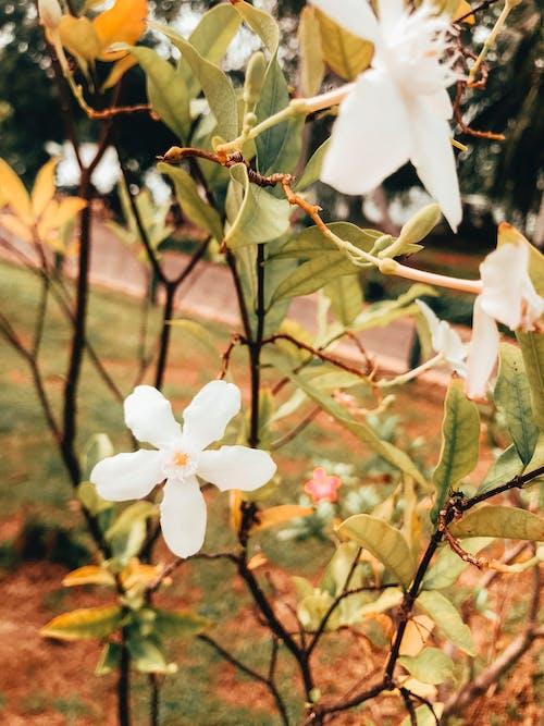Fotos de stock gratuitas de árbol, blanco, día, flor