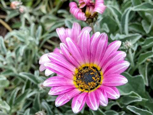 Free stock photo of beautiful, beauty in nature, flower, purple flower