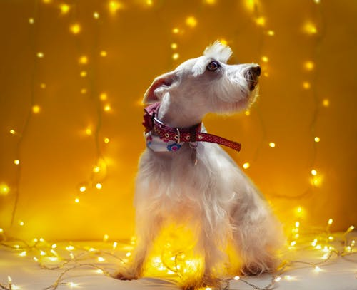 Foto stok gratis anjing, anjing peliharaan, binatang peliharaan, bokeh