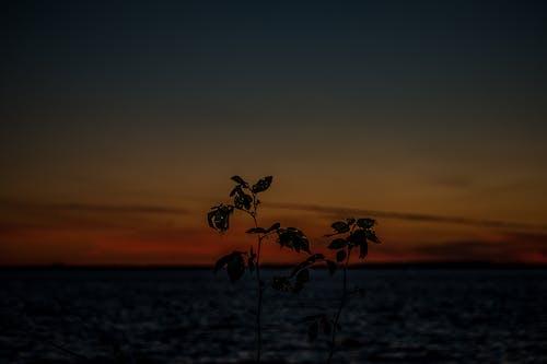 Ingyenes stockfotó árnyék, árnyékok, gyönyörű naplemente, naplemente témában