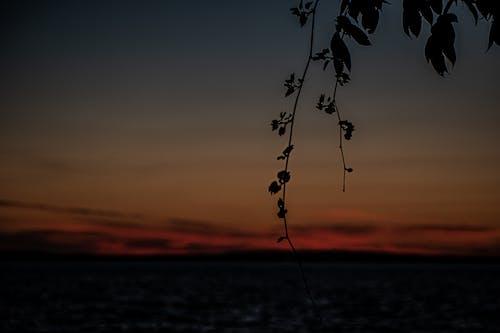 Ilmainen kuvapankkikuva tunnisteilla auringonlasku, auringonlasku taivas, kaunis auringonlasku, varjo