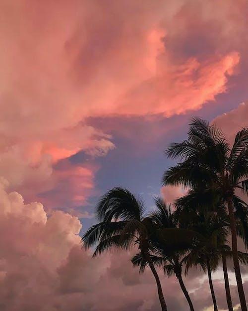 Coconut Trees Under Orange Sky