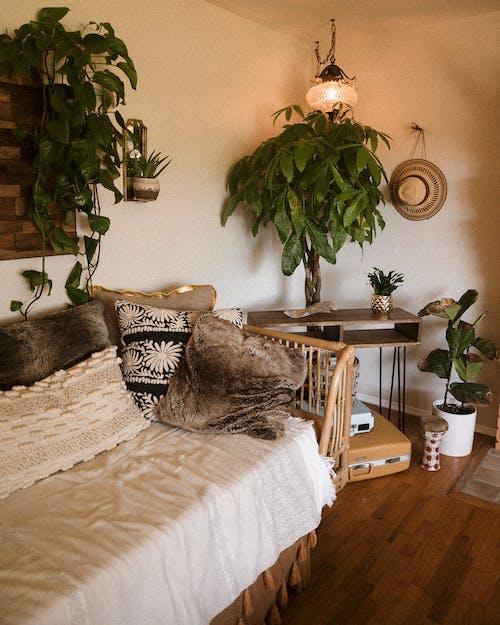 가구, 거실, 거주 공간, 깨끗한의 무료 스톡 사진
