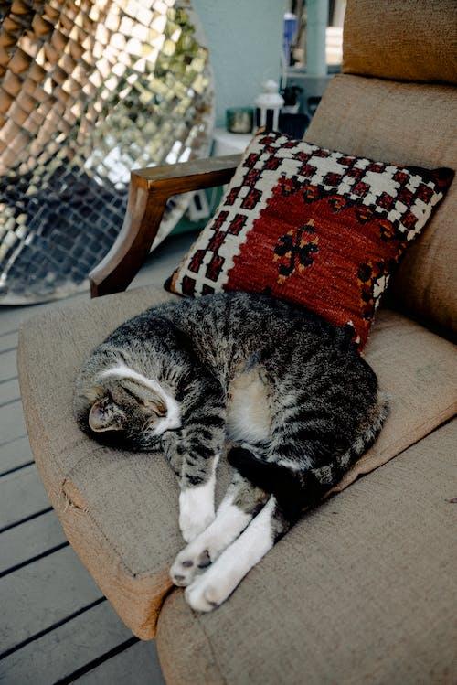 Безкоштовне стокове фото на тему «відпочивати, дім, домашній, домашній кіт»